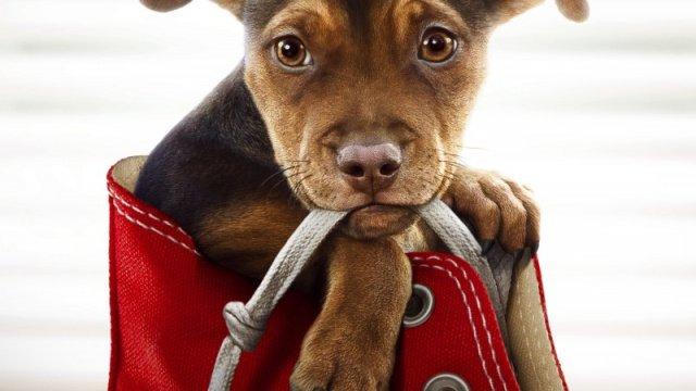 Επίσημο trailer για την ταινία A Dog's Way Home