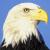 anestis_eagle